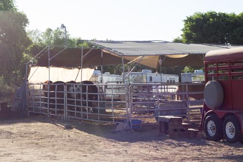 Mule Creek-130