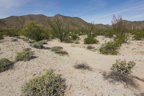 Mule Creek-142