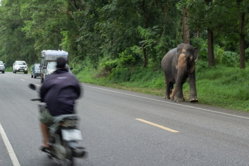 In Thailand traffic comes in all shapes and sizes
