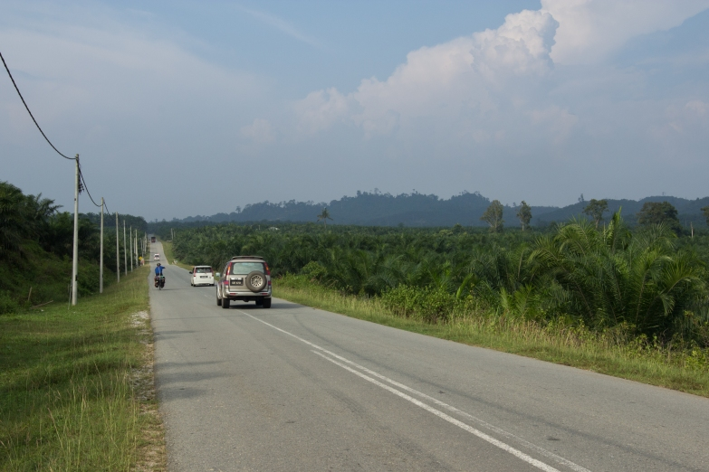 Palm oil plantations stretch into the distance